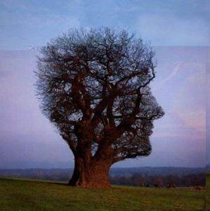weird-tree 04